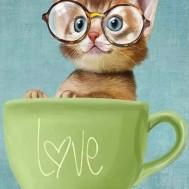 Katt i kopp, fyrkant 40x50cm