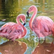 Flamingos, fyrkant 70x50cm
