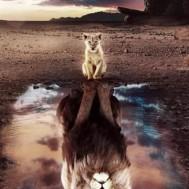 Lejon spegelbild, fyrkant 50x70cm