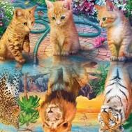 Katt spegelbild