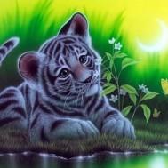 Tiger bebis, fyrkant 70x50cm
