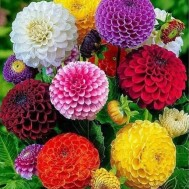 Blommor, fyrkant 50x60cm