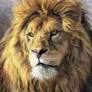 Lejon, fyrkant 50x60cm