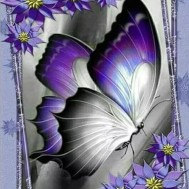 Fjäril lila, fyrkant 40x50cm