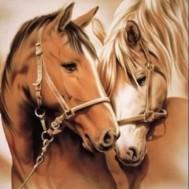 Hästar, fyrkant 70x100cm