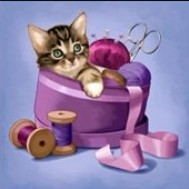 Katt i sylåda, fyrkant eller rund 30x30cm