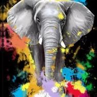 Elefant färgglad, fyrkant 40x50cm
