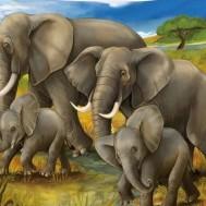 Elefanter på vandring savann, fyrkant 70x50cm
