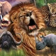 Afrika Savann djur rund 70x50cm