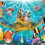 Sköldpadda rev fiskar, fyrkant 50x40cm
