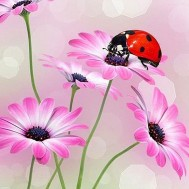 Blommor nyckelpiga, fyrkant 40x50cm