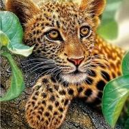 Leopard bebis, fyrkant 40x50cm