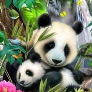 Panda, fyrkant 40x50cm