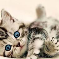 Katt unge, rund eller fyrkant 50x40cm