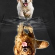 Spegelbild golden hund, rund 50x60cm