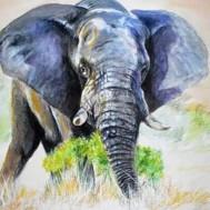 Elefant 30x40cm rund