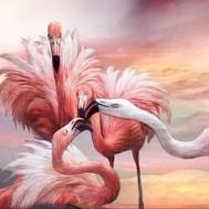Flamingos 50x40cm rund