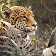 Geopard 50x40cm rund
