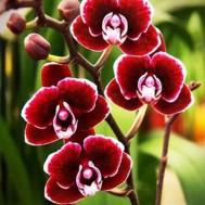 Blommor 40x50cm rund