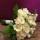 Brudbukett i vitt o kräm
