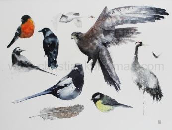 Gicléetryck 9 fåglar och 1 fjäder - Gicléetryck 9 fåglar och 1 fjäder