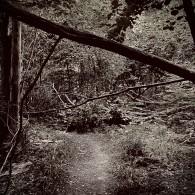 mörk skog