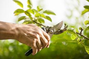 Trädbeskärning & trädvård i Sundsvall - certifierad arborist Sundsvall