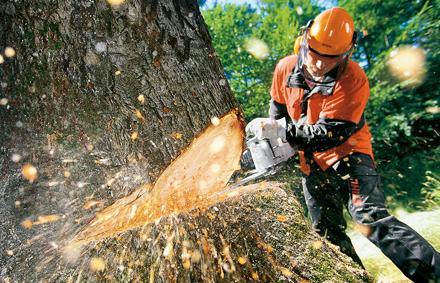 Trädfällning i Sundsvall - All typ av trädvård, trädfällning, beskärning av svåra träd mm i och runt om Sundsvall