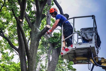 Arborist Sundsvall - Trädfälling Sundsvall hjälper dig med trädvård och trädfällning i och runt om Sundsvall