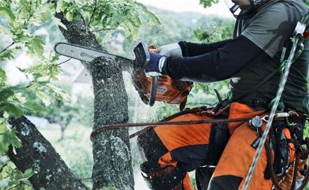 Trädbeskärning Sundsvall – beskärning träd, fruktträd, äppelträd