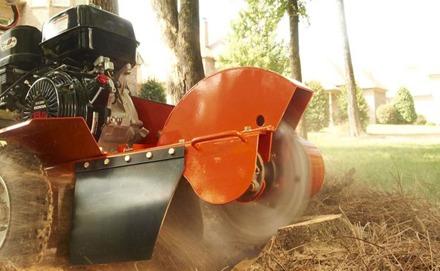 Stubbfräsning Sundsvall. Vill du ha hjälp med stubbfräsning och borttagning av stubbar i Sundsvall? Kontakta City Trädservice i Sundsvall för stubbfräsning och