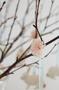 Påskhängen rosa MAILEG