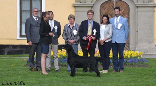 Best In Show Ulriksdal 2017: Söklustens Miracle Magic, Flatcoated Retriever, Tilde Uddin, Kvicksund. Domare: Jan-Erik Ek