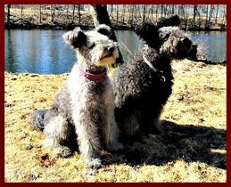 Bizzy och Figo