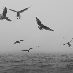 Med havet intill.