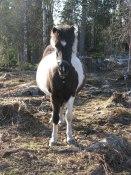 Hästbilder Hedebogård 049