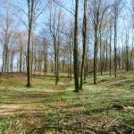Prästabonnaskogen