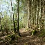 Skogen vid järnvägen