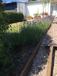 Kantplåtar i cortenplåt från Gardensteel fås i olika höjd och mått. De ramar in de olika materialen som finns i din trädgård. Det ramar in dina växter och blommor på ett vackert sätt...