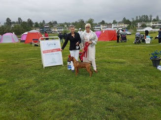 Gällivare International Show Cert Cacib BOB BIG 1!
