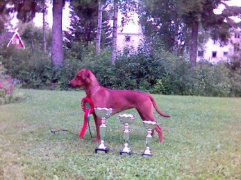 Hanar | Kennel Yrkraft´s