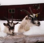 Elsa med sin son Sven!