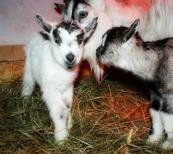 Sven med syster Idun och mamma!