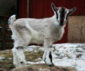 Olaf är en riktig knäget som alltid velat ligga och mysa i någons knä, och det vill han fortfarande fast han börjar bli väldigt stor och tung!