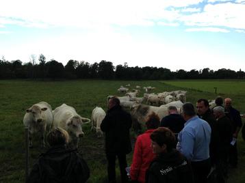 Vy över Anders grupp med kor som går med tjuren Great av Ekeröd T108.