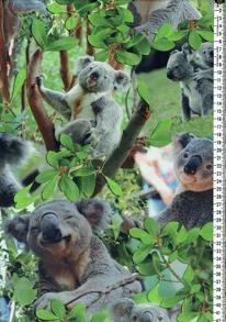 Digitaltryck - Koala Digitaltryck 92% BOMULL 8% ELASTAN BREDD 160 cm
