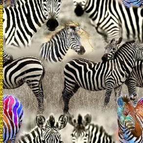 Digitaltryck - Zebra Digitaltryck 92% BOMULL 8% ELASTAN