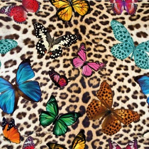Fjärilar leopard - Fjärilar leopard