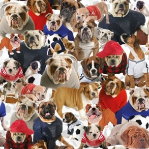 Hundar bulldog - Hundar