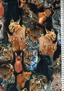 Vilda katter - Vilda katter